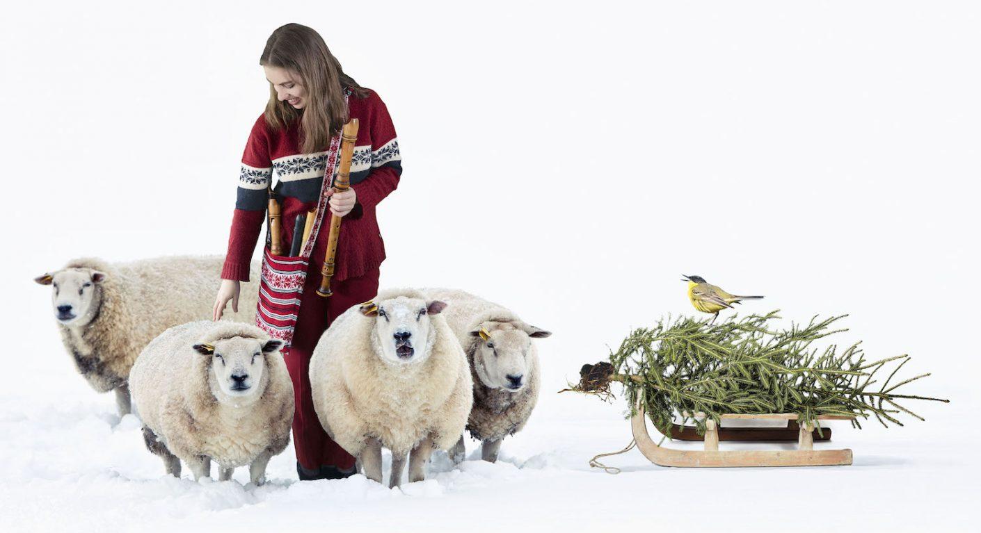 sheep in a cold white winter landscape